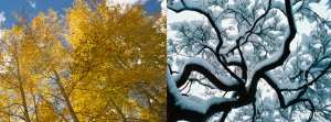 fall and winter trees