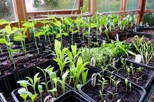 growing-vegetable-garden-rookie-mistakes_4a135fa216a2c40e06f2a8181eb8bb15_3x2_jpg_300x200_q85